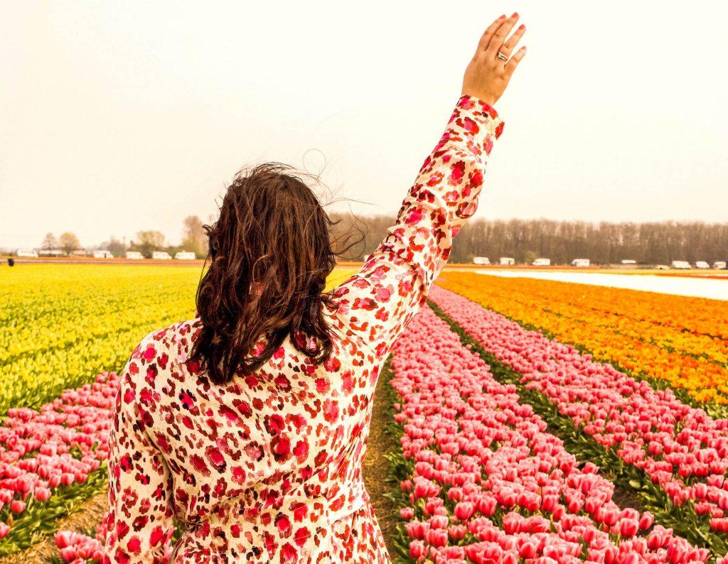 Tulpenfelder